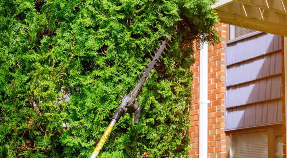 5 Best Pole Hedge Trimmers of 2019 - Long Reach Hedge
