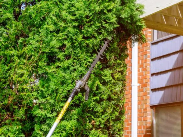 5 Best Pole Hedge Trimmers of 2021 – Long Reach Hedge Trimmer Reviews