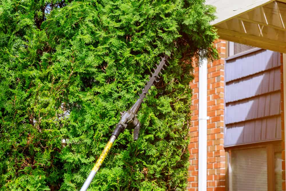 Best Pole Hedge Trimmer Reviews