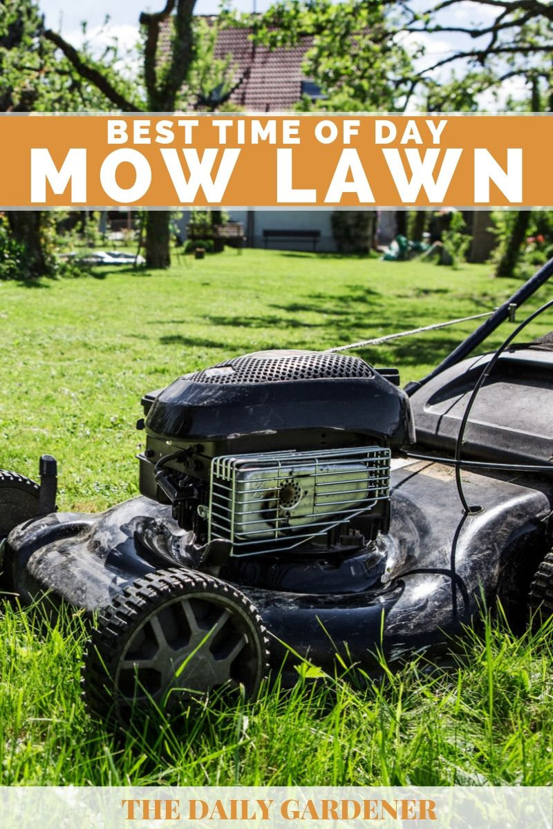 What's the Best Time of Day to Mow Lawn? - The Daily Gardener