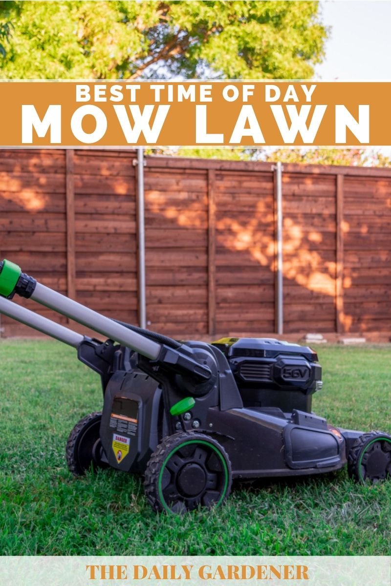 Best Time of Day to Mow Lawn 2