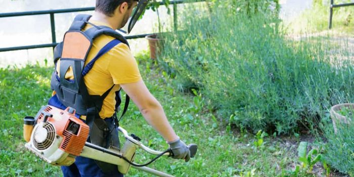 Best Weed Eater 1