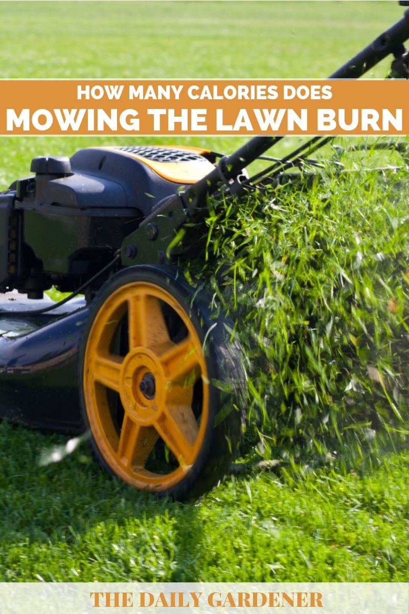 Calories Does Mowing the Lawn Burn 1