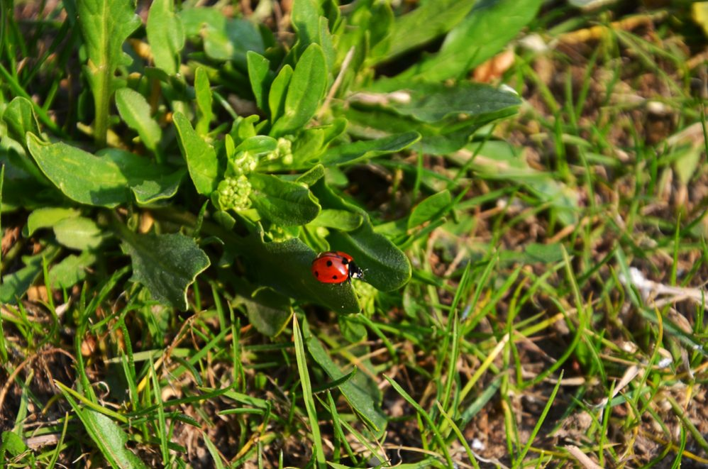 Common Flying Bugs in Your Lawn