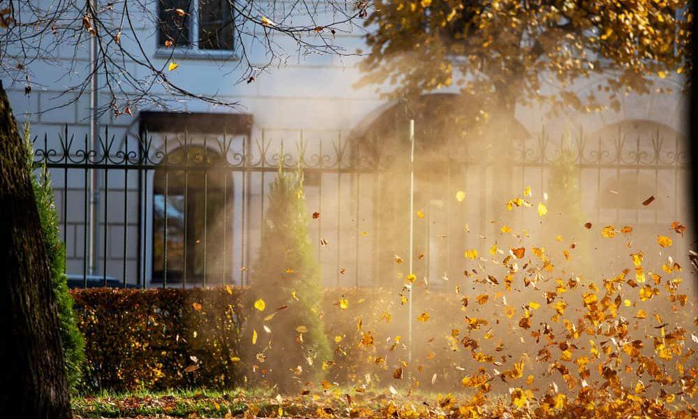 Gas vs. Electric Leaf Blower