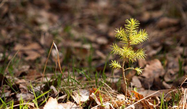 Get Rid of Tree Saplings