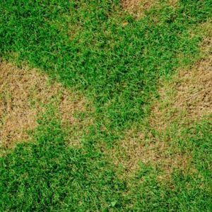 How Do I Get Rid of Rust in My Lawn