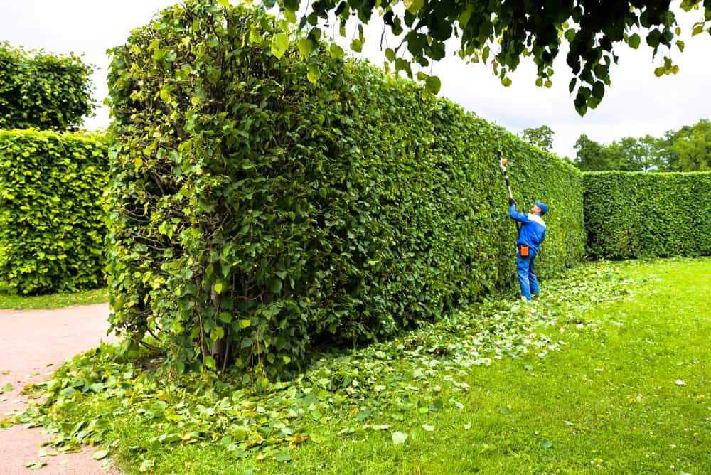 How to Choosethe best pole hedge trimmer