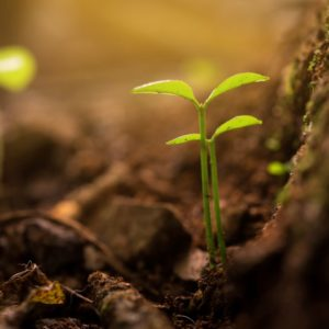 How to Stop Tree Roots from Sprouting in Lawn