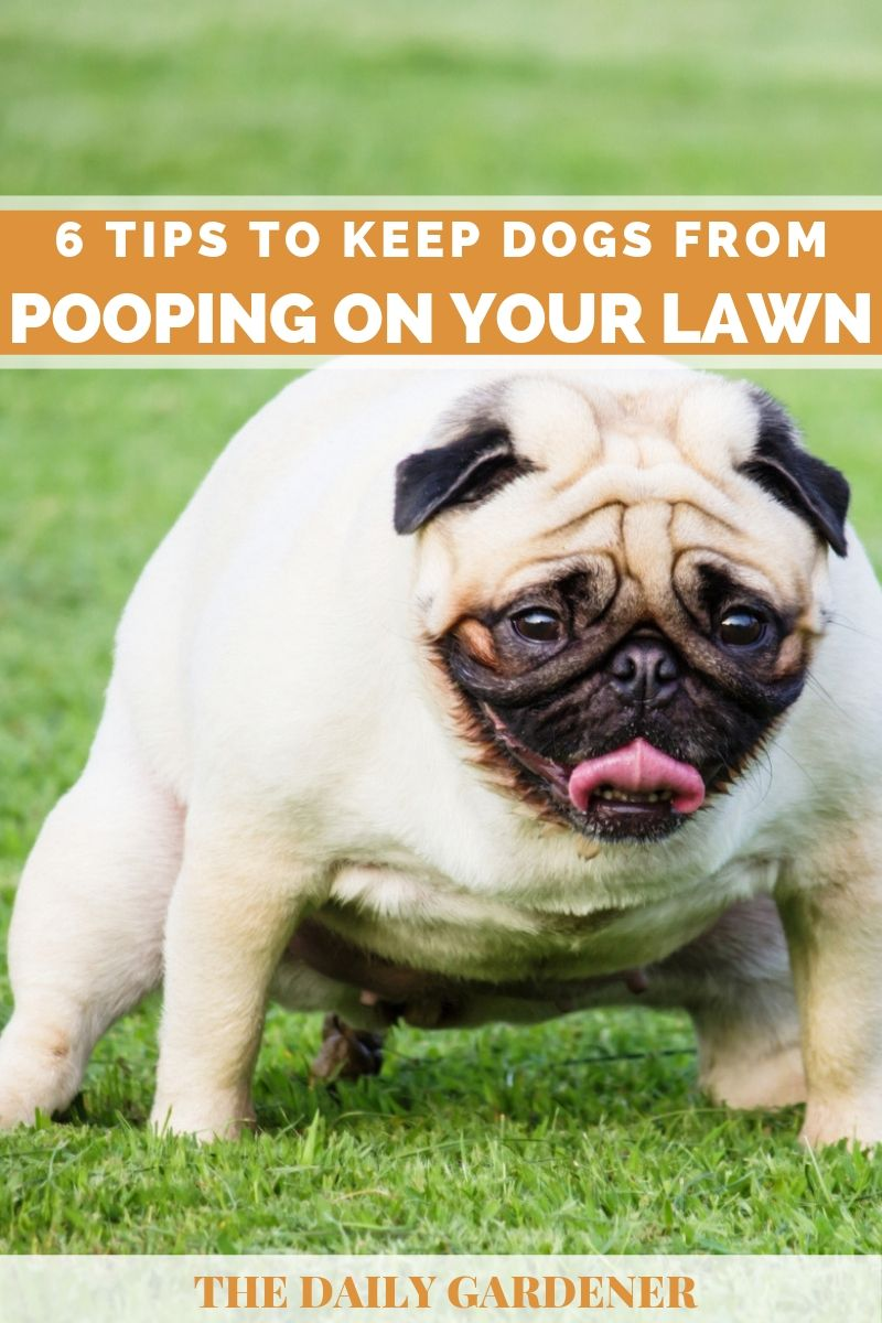 Keep Dogs from Pooping on Lawn 1
