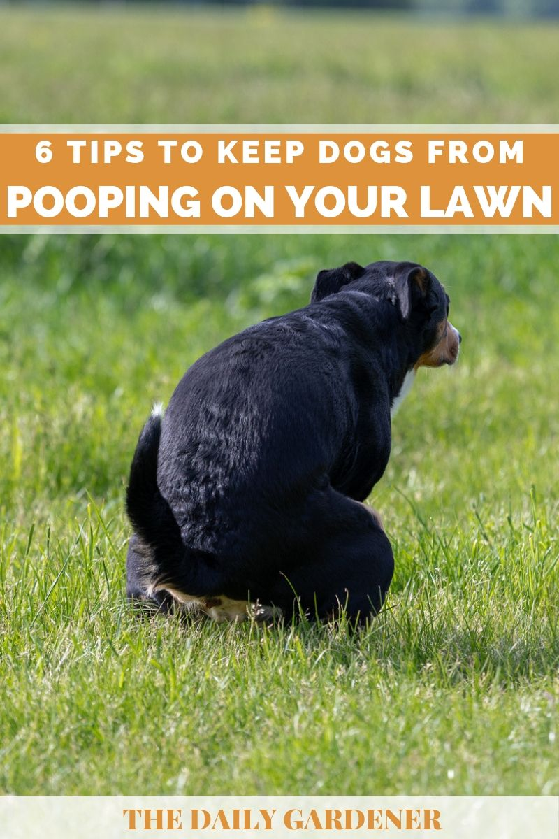 Keep Dogs from Pooping on Lawn 2