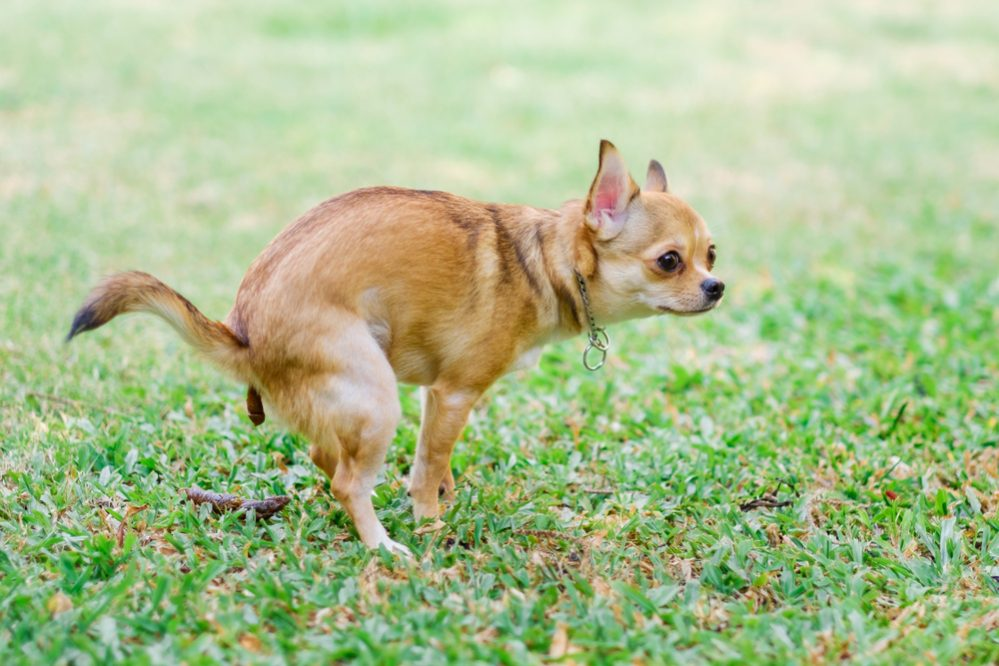 6 Tips to Keep Dogs from Pooping on Your Lawn - The Daily