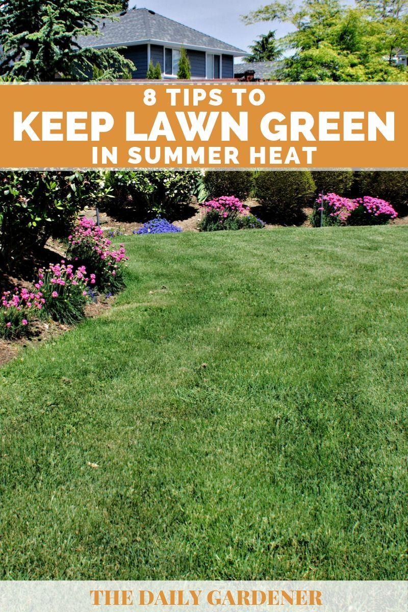 Keep Lawn Green in Summer Heat 1
