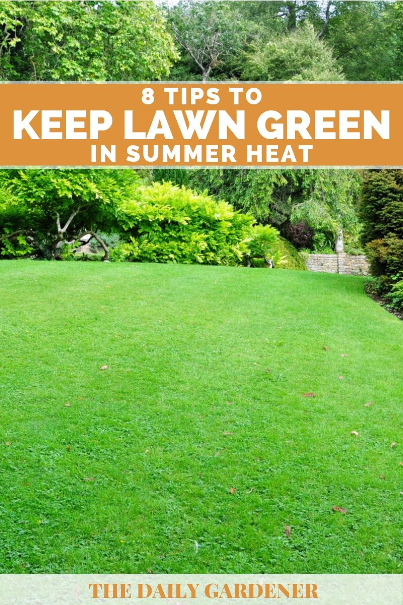 Keep Lawn Green in Summer Heat 2