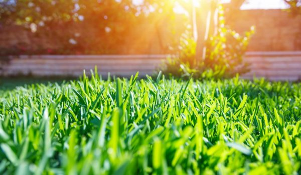 Keep Lawn Green in Summer Heat