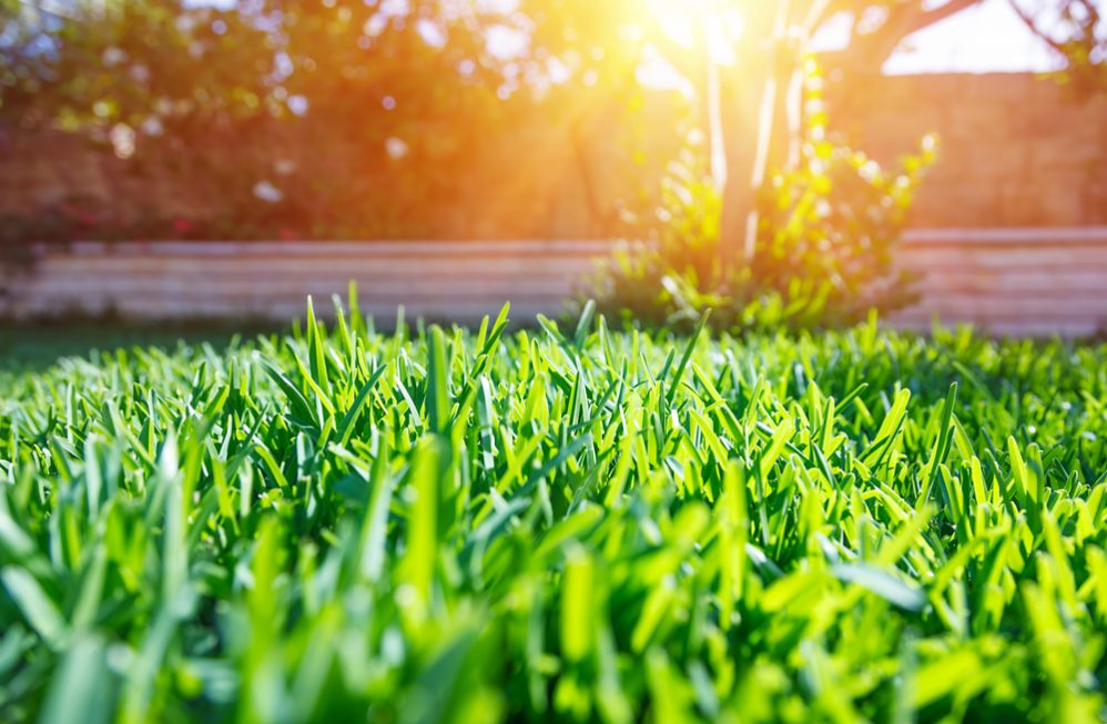 Keep Lawn Green in Summer Heat
