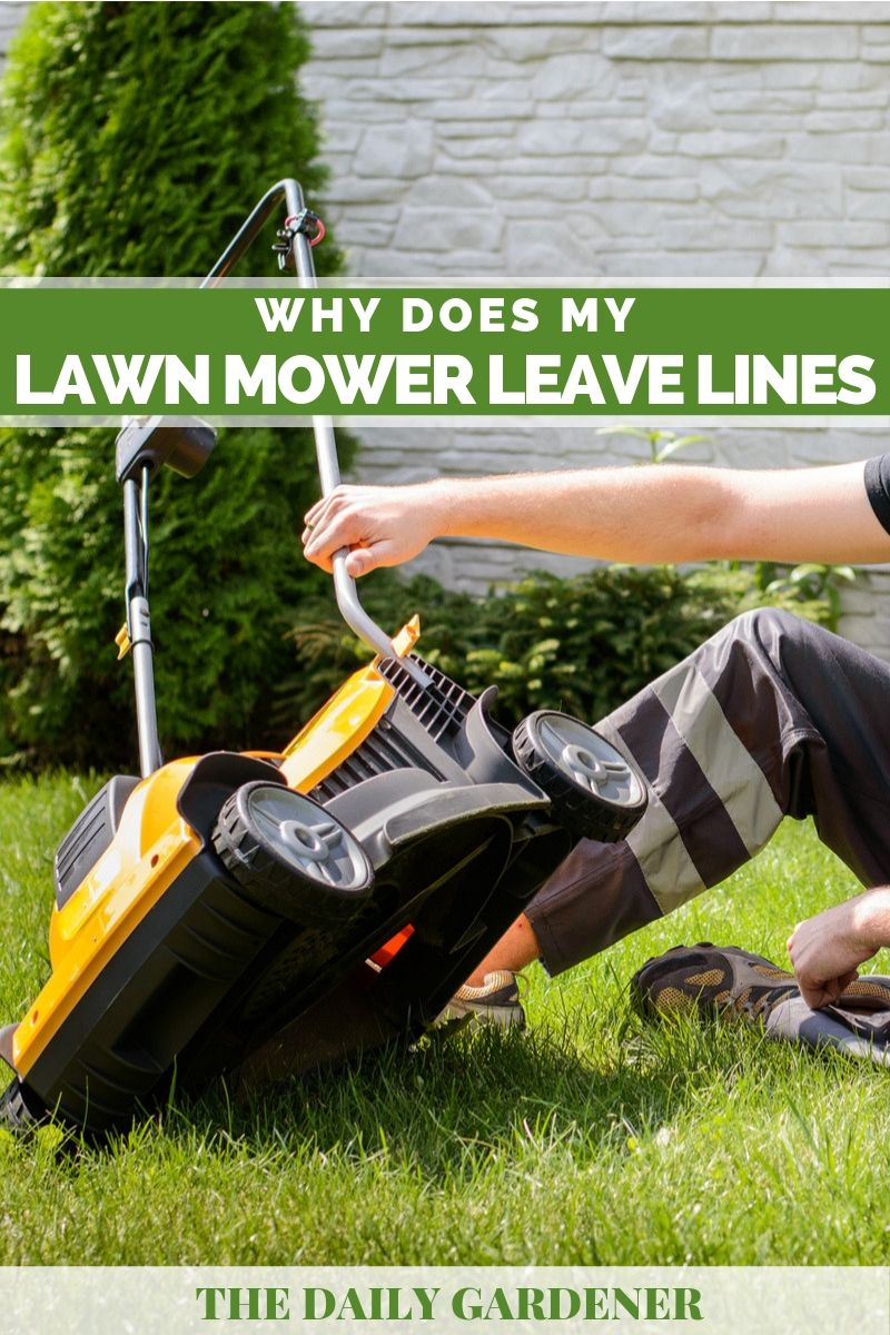 Lawn Mower Leave Lines 1