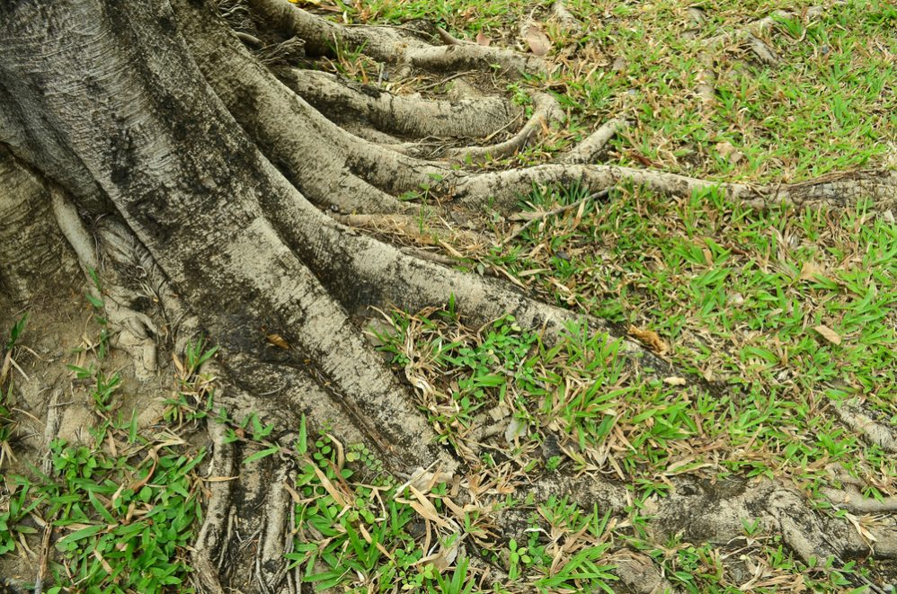 Practical Ways to Solve the Issue with Visible Roots