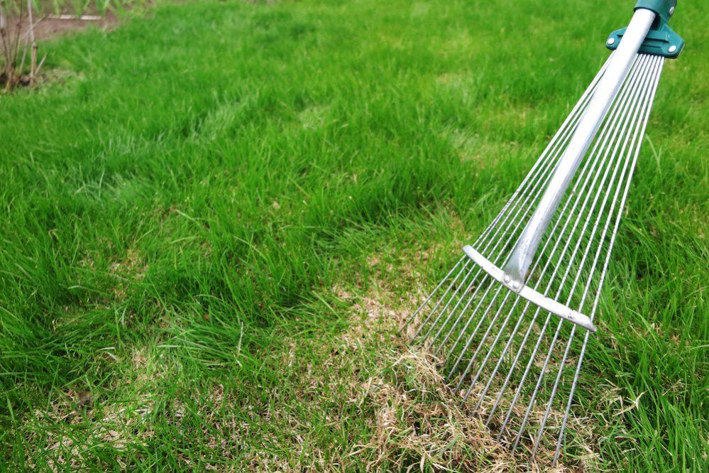 Rake lawn