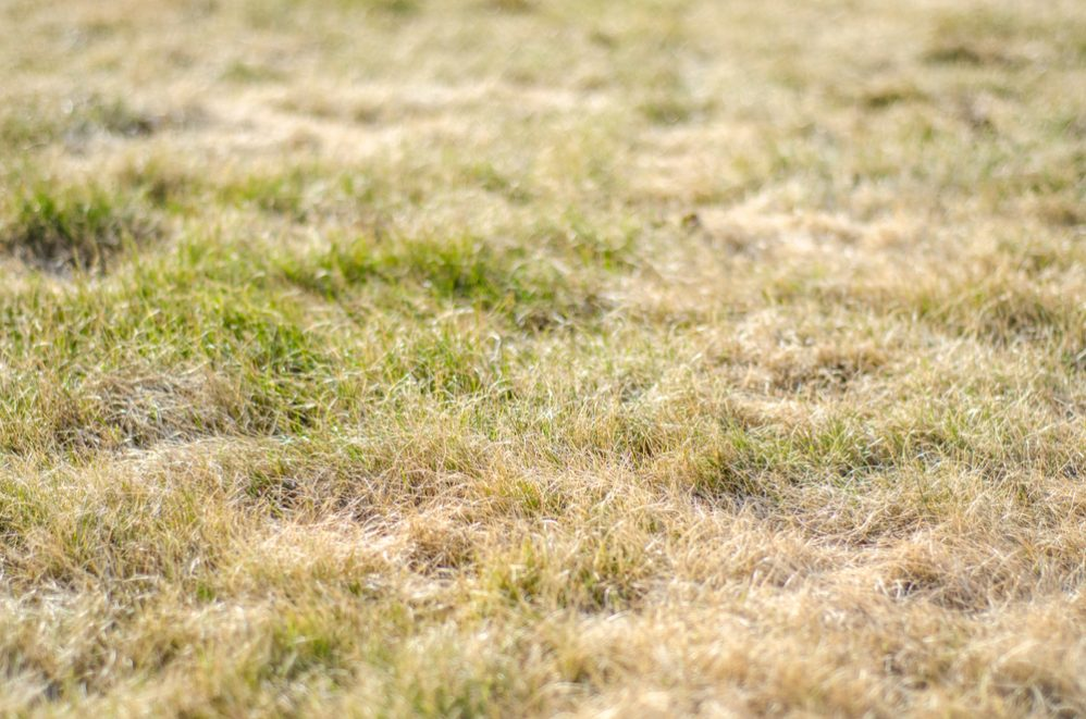 Reasons Why Your Lawn Is Always Dry