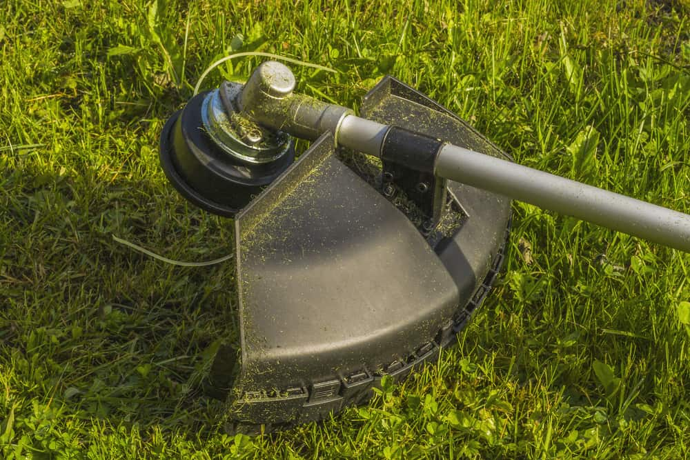 How to Remove Weed Eater Head Fast? - The Daily Gardener