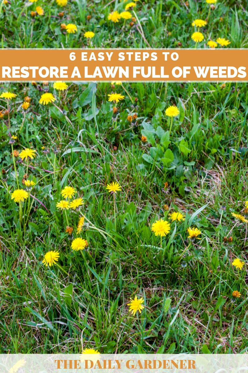 Re A Lawn Full Of Weeds