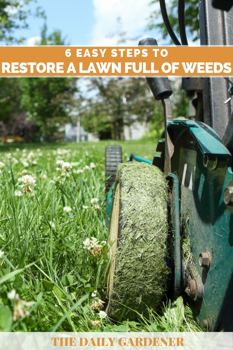 Restore a Lawn Full of Weeds 6