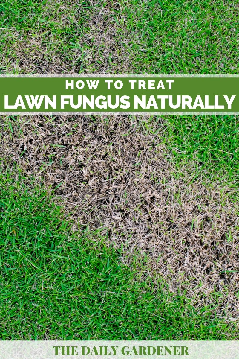 How To Treat Lawn Fungus Naturally
