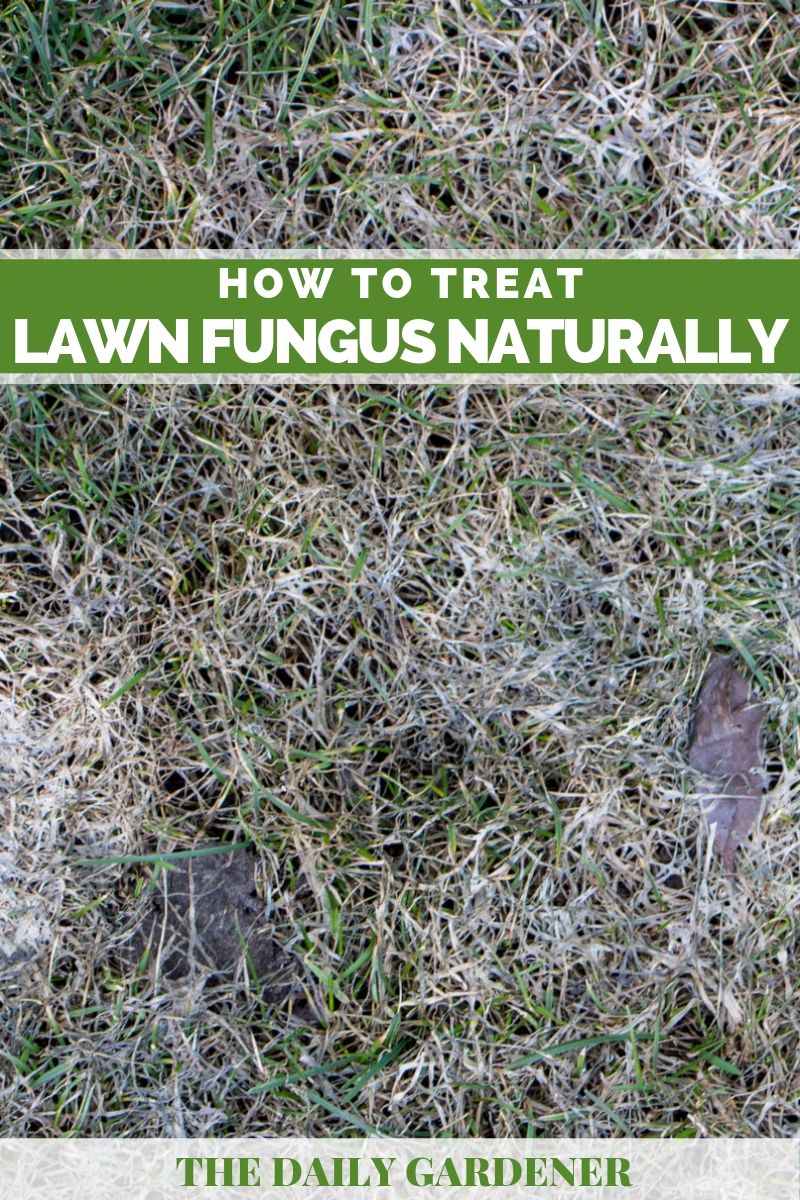Treat Lawn Fungus Naturally 2