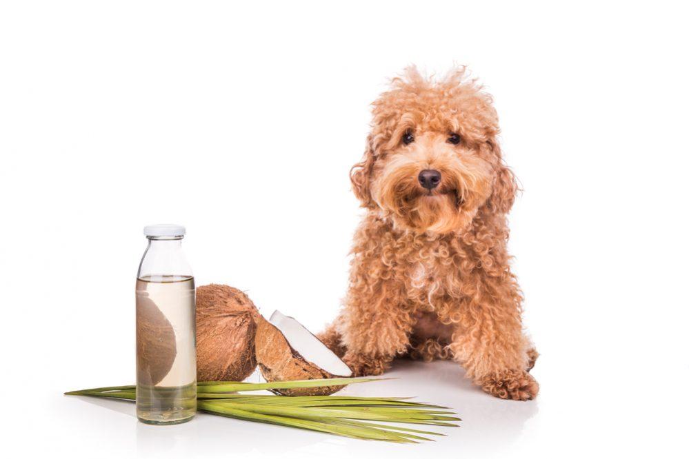 dog repellents