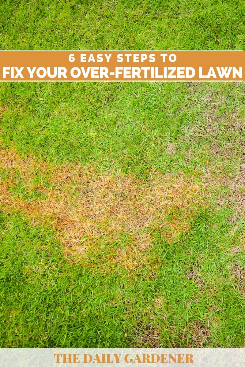 fix over fertilized lawn 2