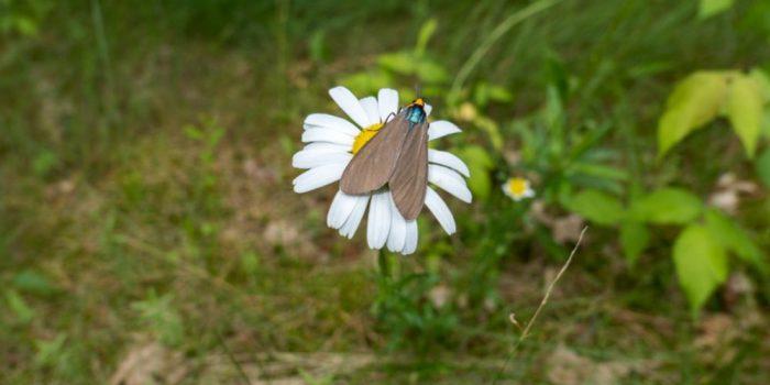 lawn flying bugs