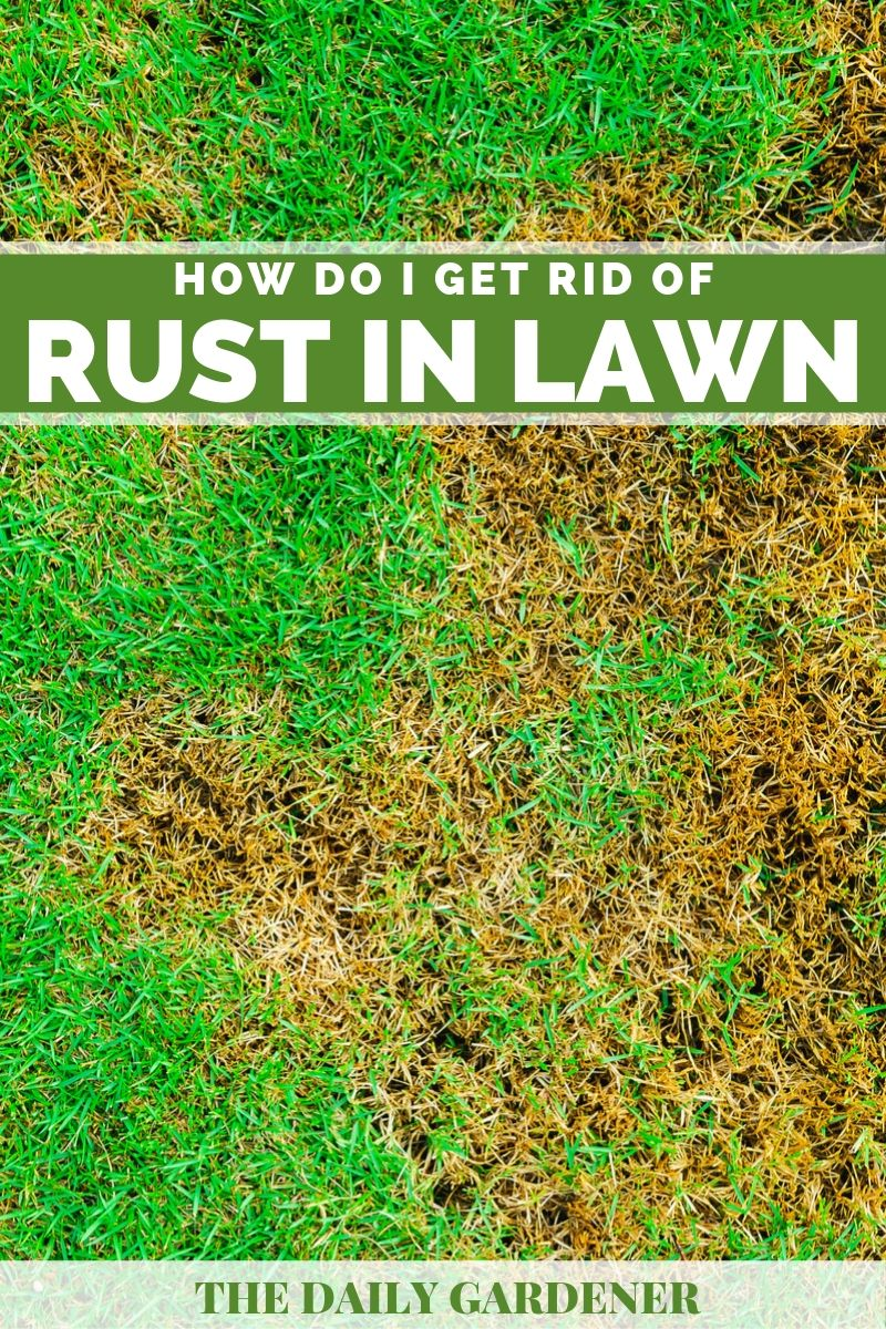 get rid of rust 1