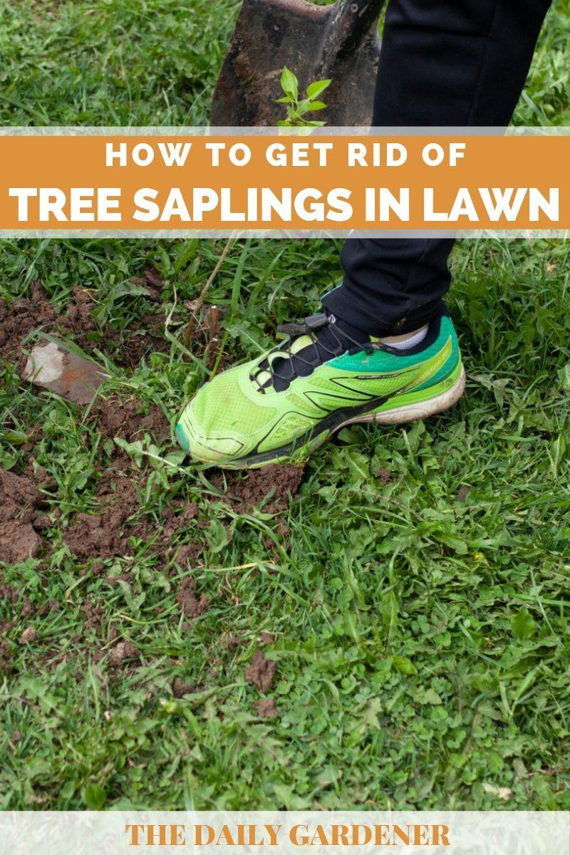 get rid of tree saplings 2