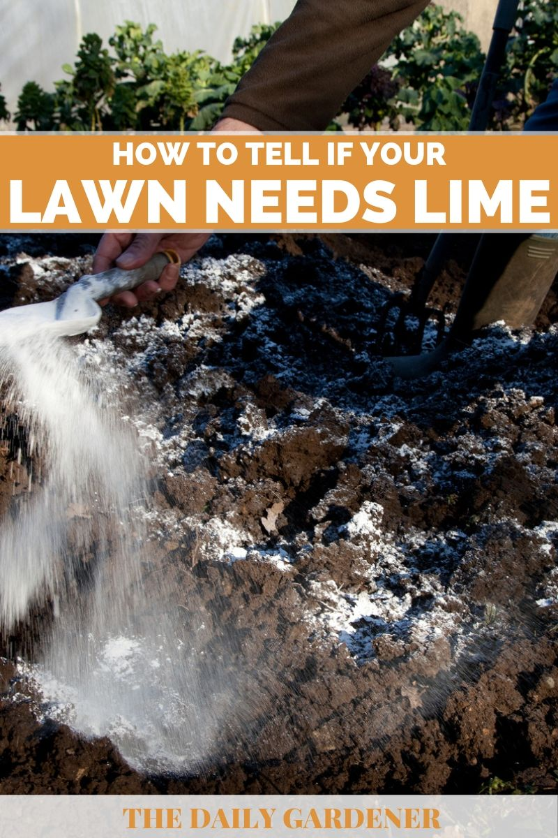 how to tell lawn needs lime 1