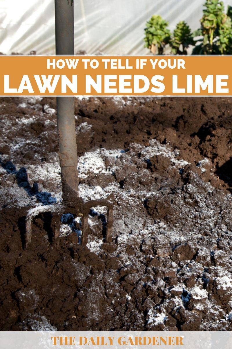how to tell lawn needs lime 2