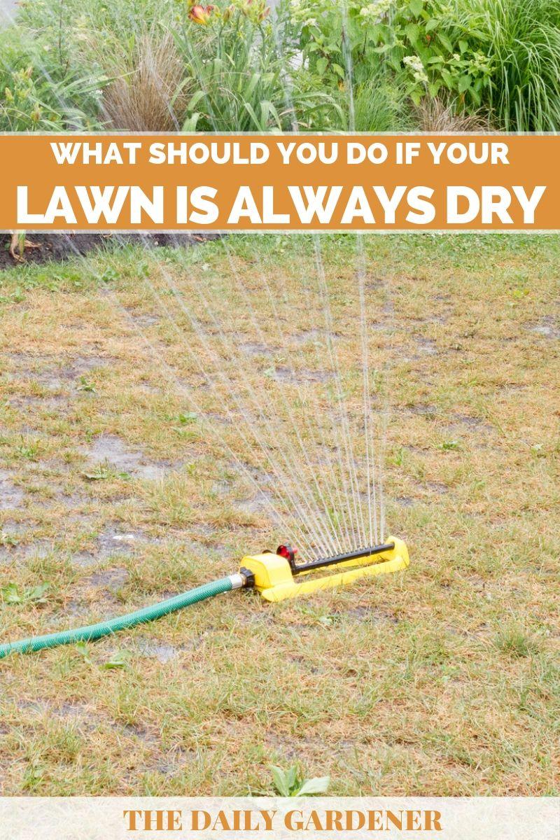lawn always dry solution 2