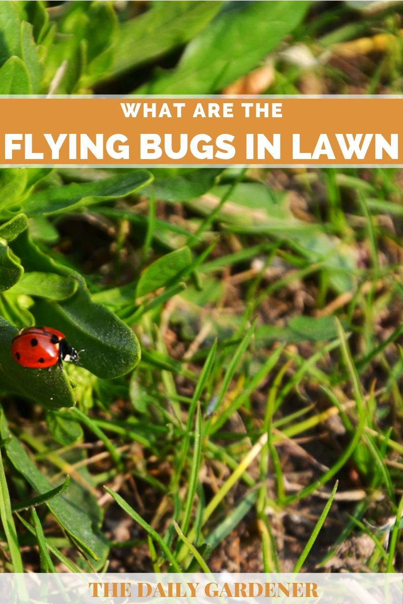 lawn flying bugs 2