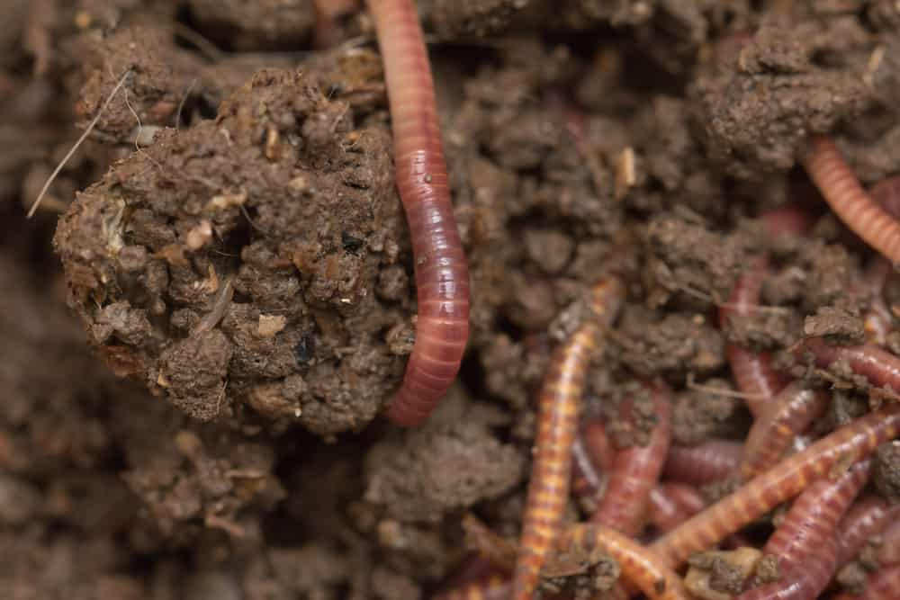 red worm composter