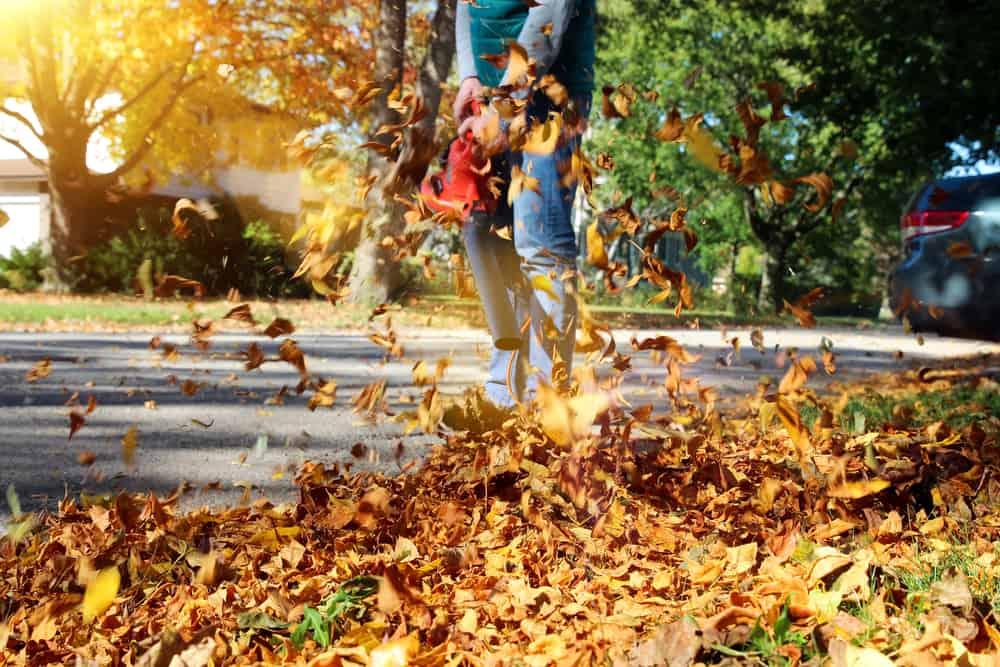 use a leaf blower