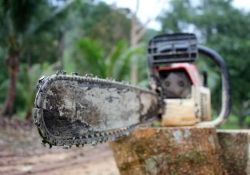 4 Cheap Chainsaw Bar Oil Substitutes for Saving Money