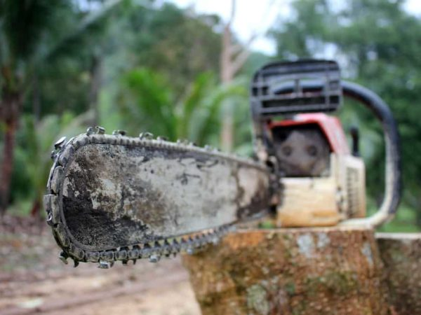 Top 4 Cheap Chainsaw Bar Oil Substitutes for Saving Money