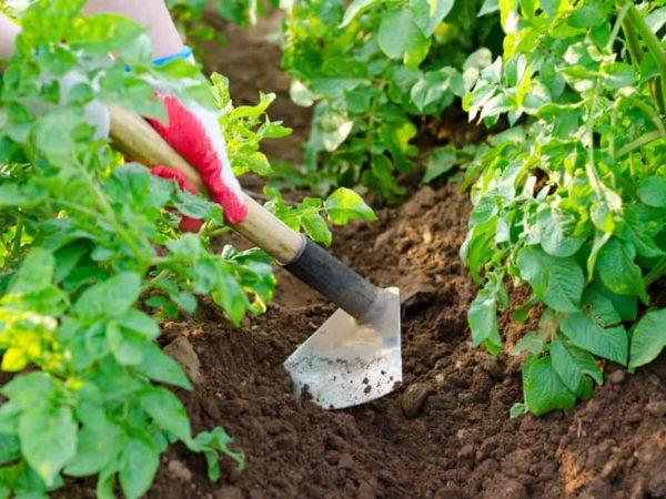 10 Best Garden Hoes of 2021 – Gardening Hoe Tool for Weeding