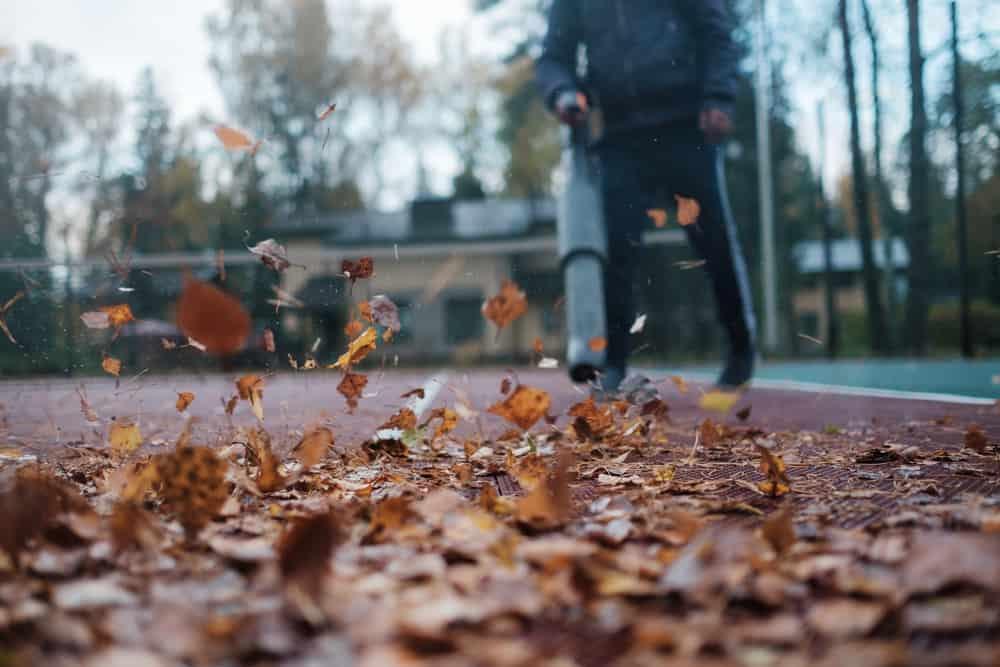 Blast those leaves