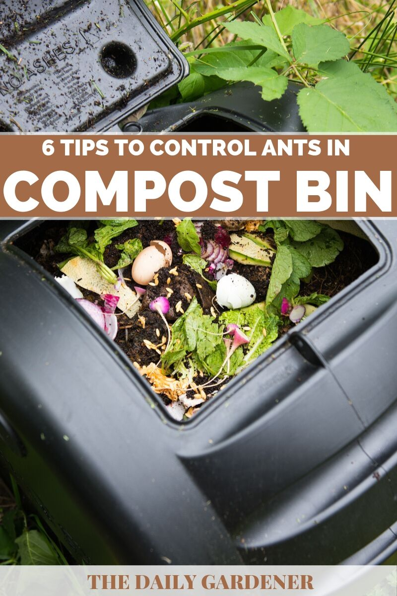 Control Ants in Compost Bin 3