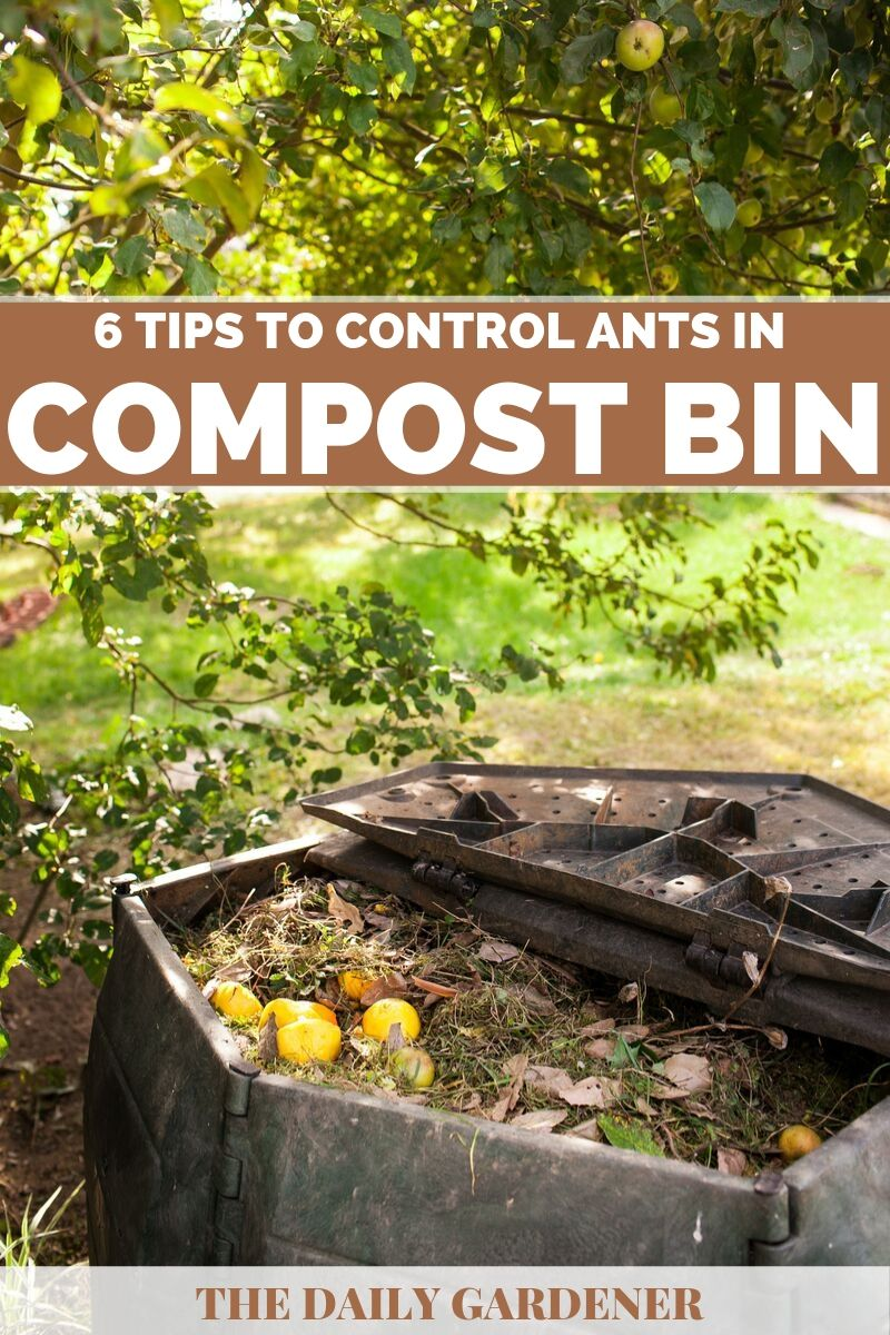 Control Ants in Compost Bin 4