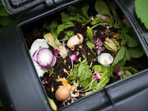 6 Tips to Control Ants in Compost Bin