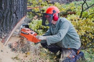 chainsaw chaps