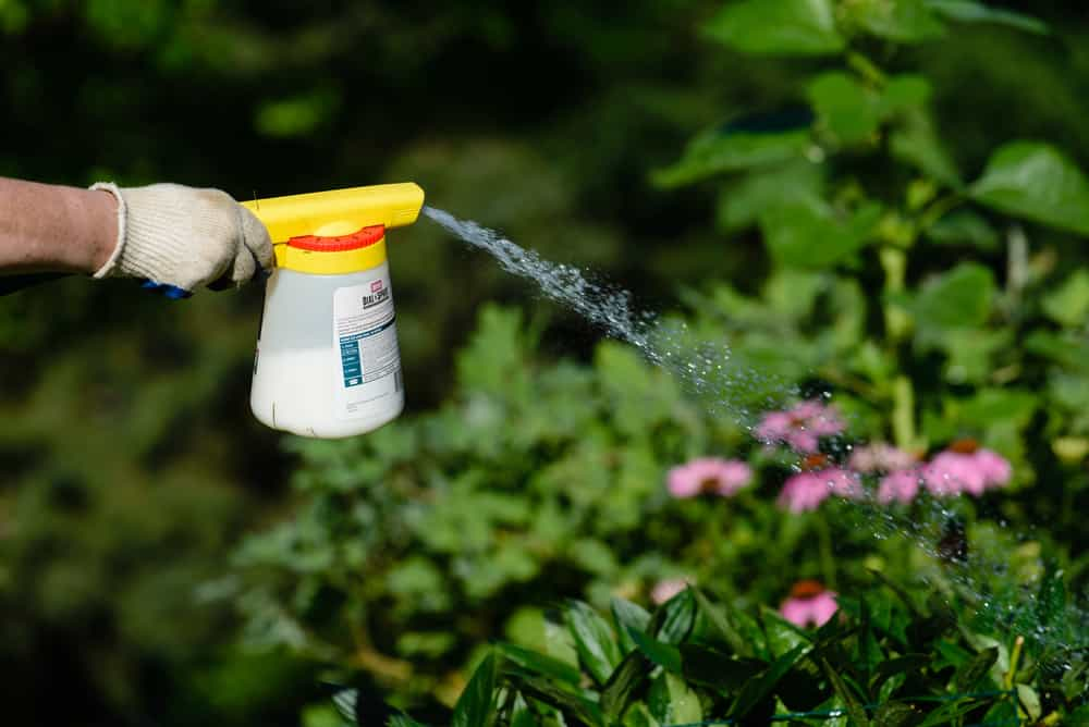 Hose End Sprayer buying guide