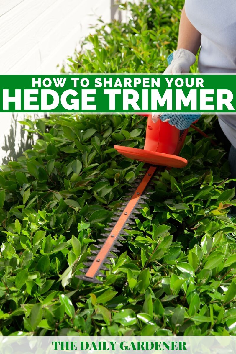 How to Sharpen Hedge Trimmer 1